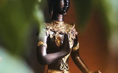 Shatavari, Plante de l'Équilibre Hormonal de la Femme